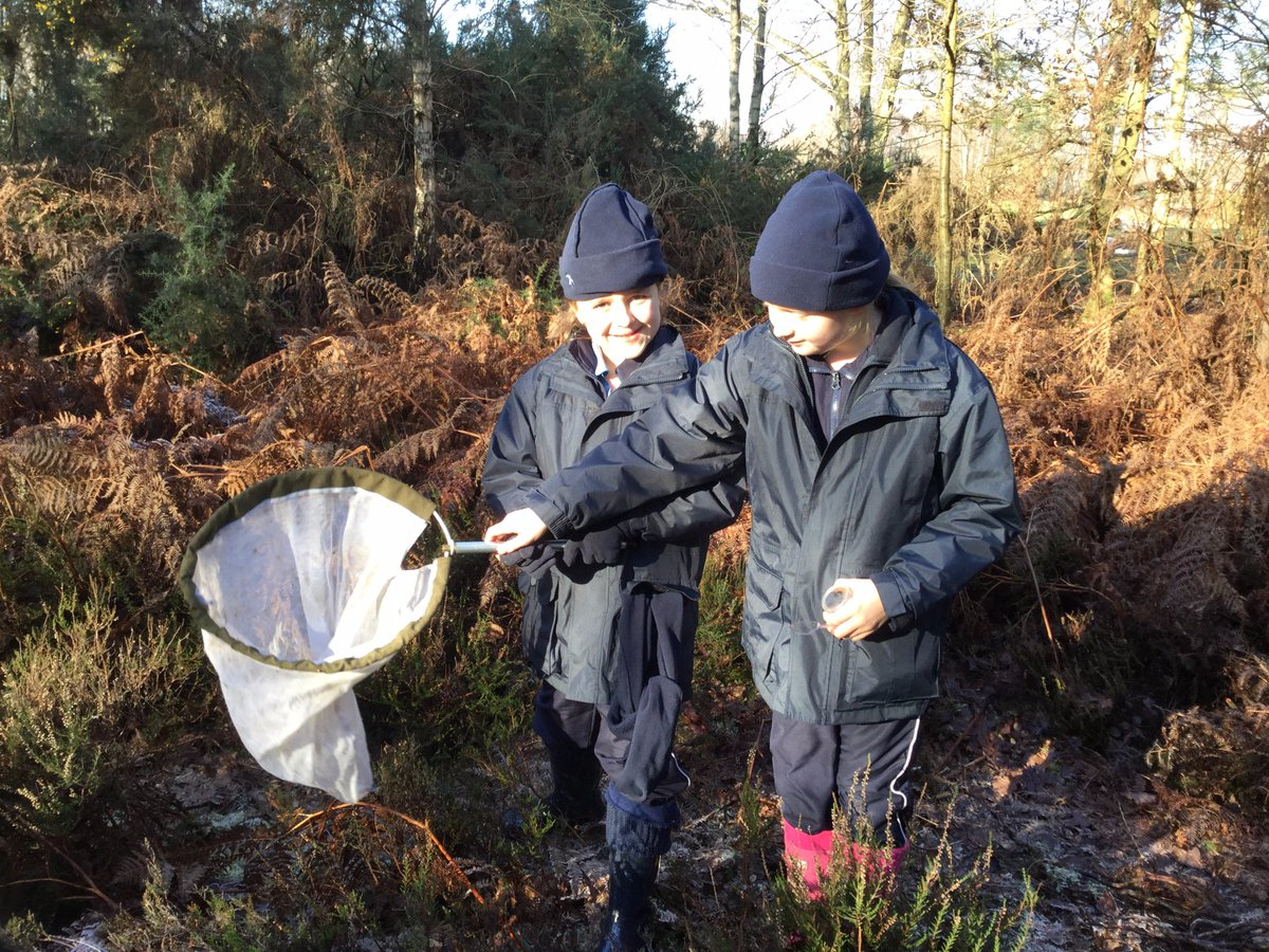 Yr4 #forestschool at Chobham Common investigating heathland habitat. Thank you @SurreyWT for our adventures and bug catching #outdoors #fun<br>http://pic.twitter.com/BM0zpPgdvC