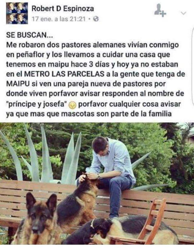 RT! Pareja de pastores alemanes perdidos en #Maipu sector metro Las Parcelas @MascotasCl @DeMaipuCL @CiudadanoMaipu @Animalperdidocl<br>http://pic.twitter.com/ZUSyOuWUBn
