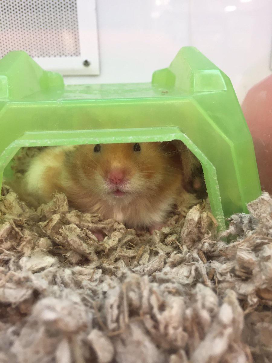I don&#39;t mean to brag here, but I just walked out of a Petco and a Petsmart with zero hamsters. #willpower #NewYearResolutions #humblebrag<br>http://pic.twitter.com/n8EsgnjfQs