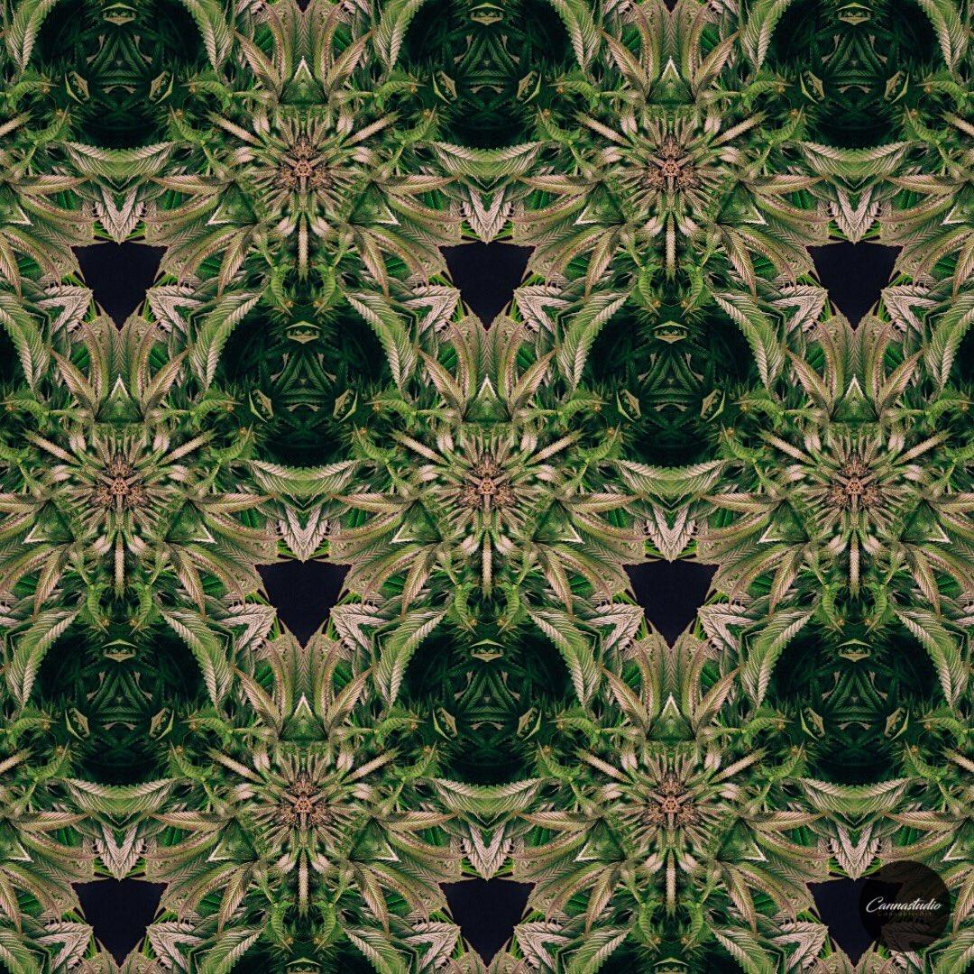 Comme des Garçons. #Cannabis #Art #Cannastudio #PDX <br>http://pic.twitter.com/6dxYTzyLdL