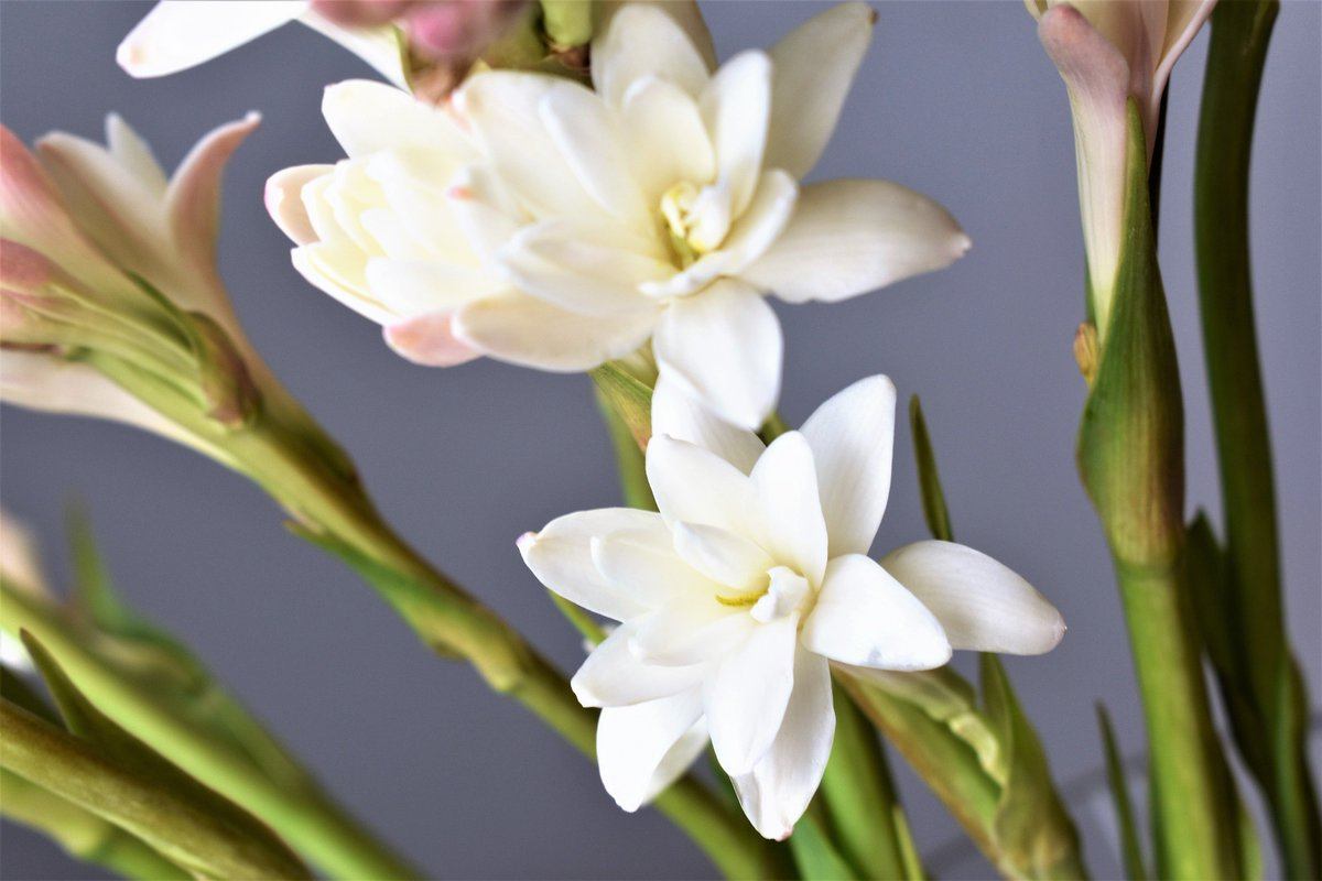 Pennock Floral On Twitter Can You Guess What Flower This Is First