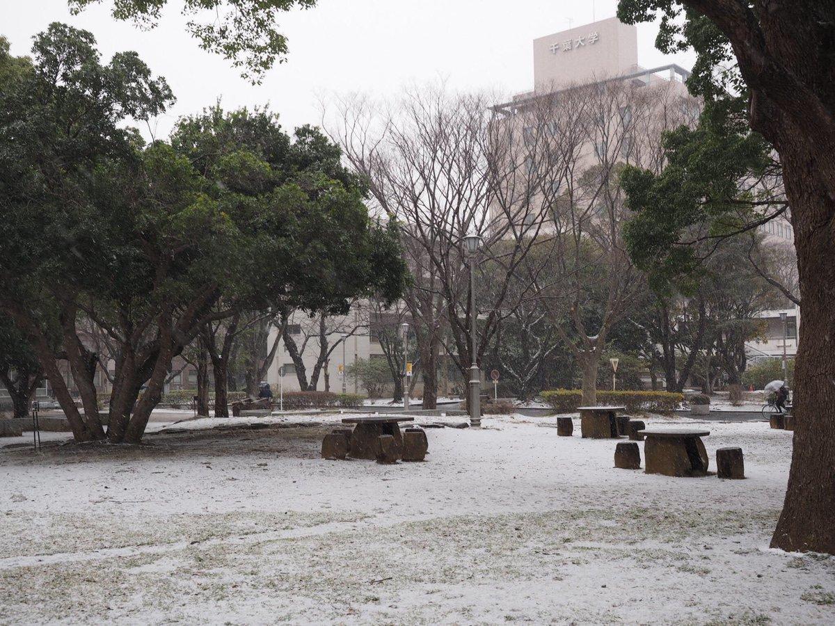 千葉大学西千葉キャンパスでは、1時間ほど前から本格的に雪が降り始めました。これからお出掛けの方は、お足元にご注意ください。 https://t.co/OUhYjOGlEC https://t.co/XAOiJeLkaQ