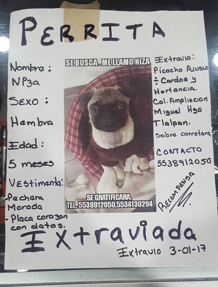 #SeBusca apoyemos difundiendo! RT @PrrosPerdidosMX @CuidandoHuellas @UbiCanApp @MascotaCoyoacan<br>http://pic.twitter.com/3RWHI3iNaT