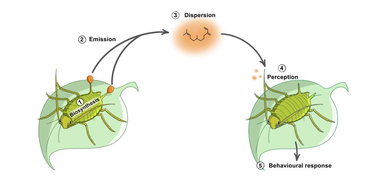 Climate change affect insect communication @AgroBioTech @UniversiteLiege  http:// link.springer.com/article/10.100 7/s10886-017-0818-z?wt_mc=Internal.Event.1.SEM.ArticleAuthorOnlineFirst &nbsp; …  #climatechange #Entomology #ecology<br>http://pic.twitter.com/o8GZqFZH1e