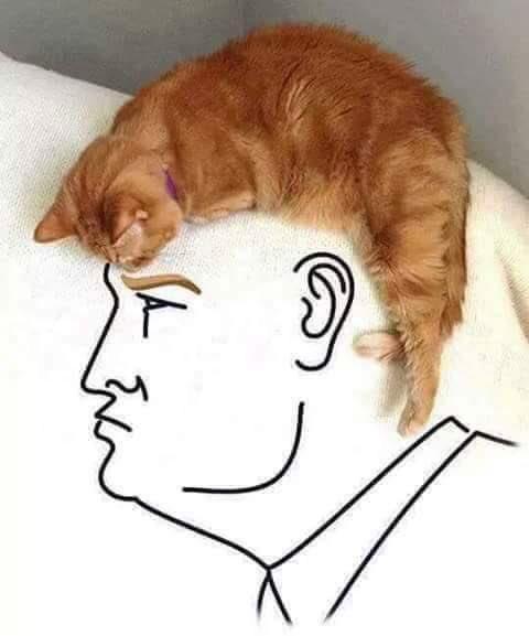 Thumbnail for Trump: Comienza el Gobierno