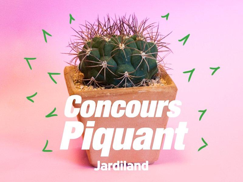 #Concours  #RT et #Follow pour tenter de gagner un cactus ! :D <br>http://pic.twitter.com/NhLP6WXPvK