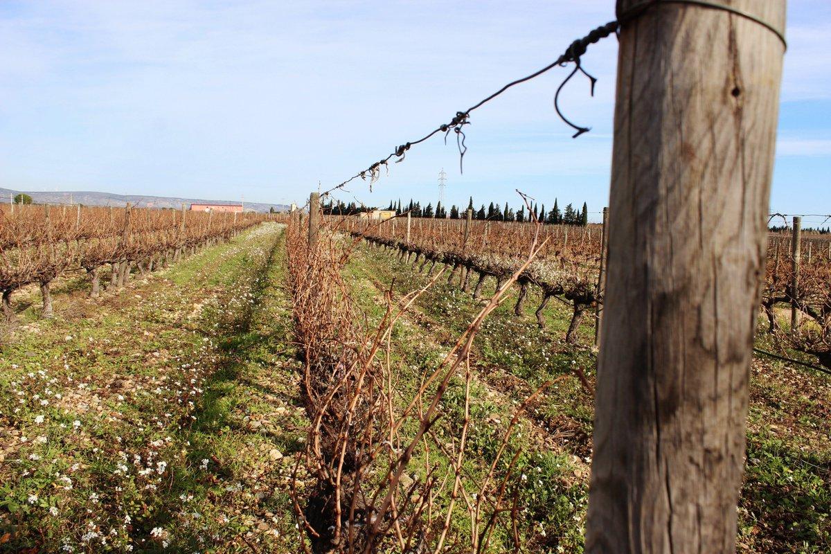 Jour de #taille dans nos #vignobles ! #cazes #rivesaltes #bio #biodynamie #vineyard #wine #winter<br>http://pic.twitter.com/PoKjVPvrx4