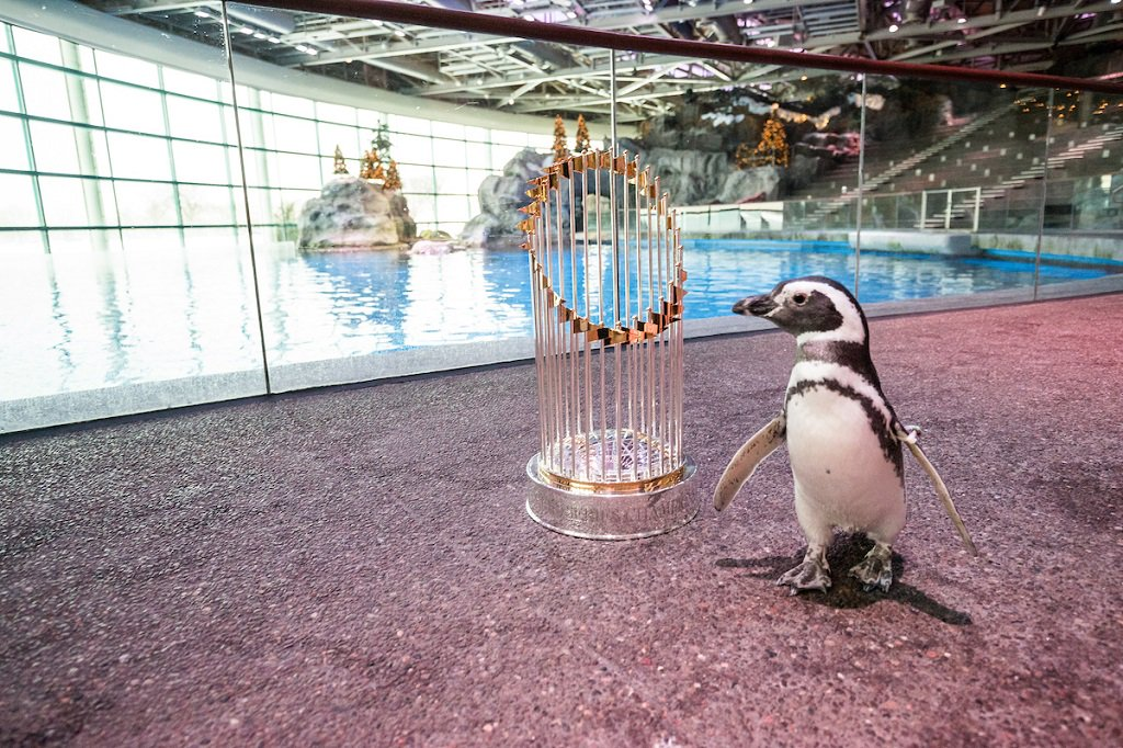 #PenguinAwarenessDay?  Oh, we've got that covered. https://t.co/3SydHQ...