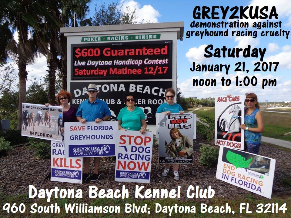 Daytona Dog Track >> Helpdogs Hashtag On Twitter