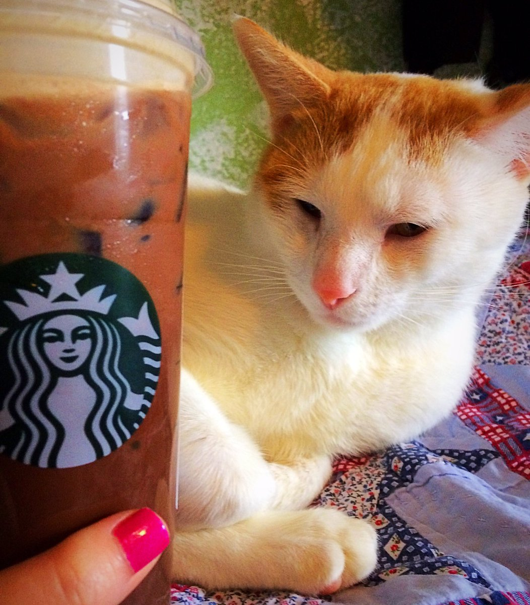 I'm so excited someone would bring me a @Starbucks and my Cheeto cat i...