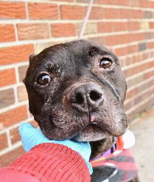 HELP!!!!!! PERFECT RATED #DOG DIES TODAY @NYCACC #NYC