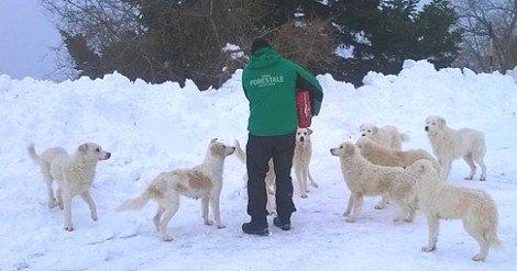 L'Italia che crolla sotto la neve, l'impegno di volontari e Forze dell'Ordine per salvare ... - https://t.co/wSX24Yv4w1 #blogsicilianotizie