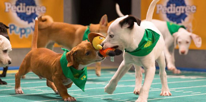 Get your first look at the adorable Puppy Bowl action https://t.co/HIM...