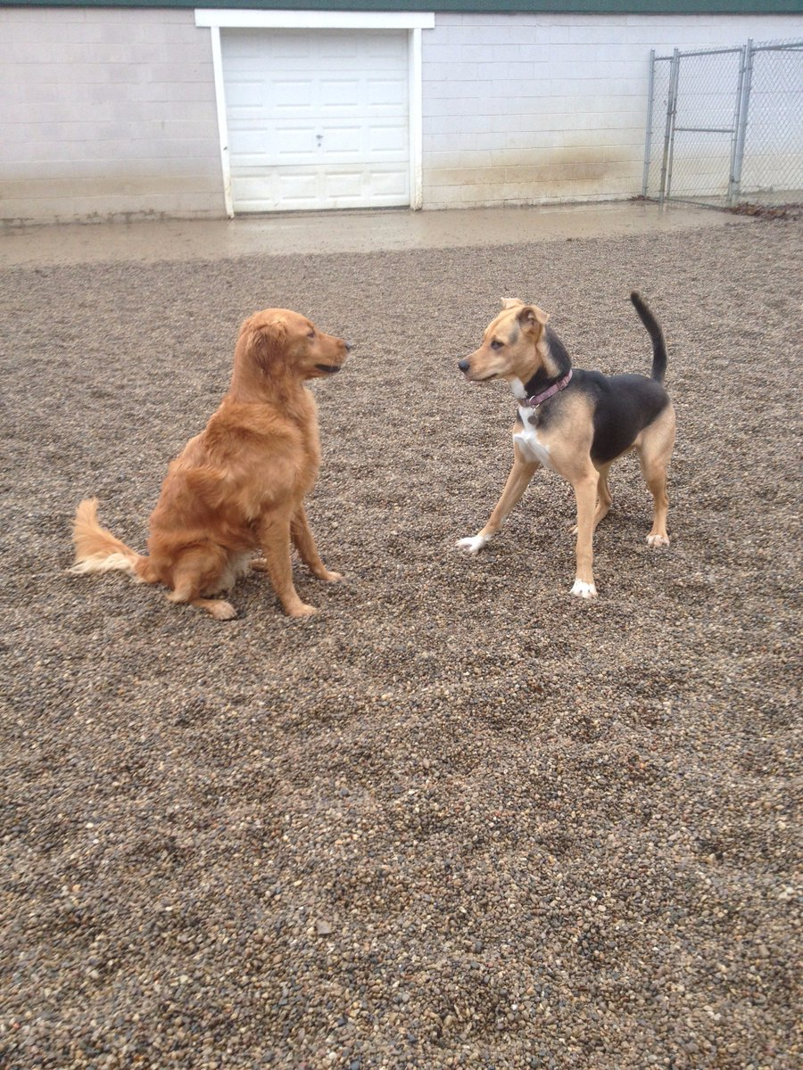 Chloe and Maggie Mae get ready to play
