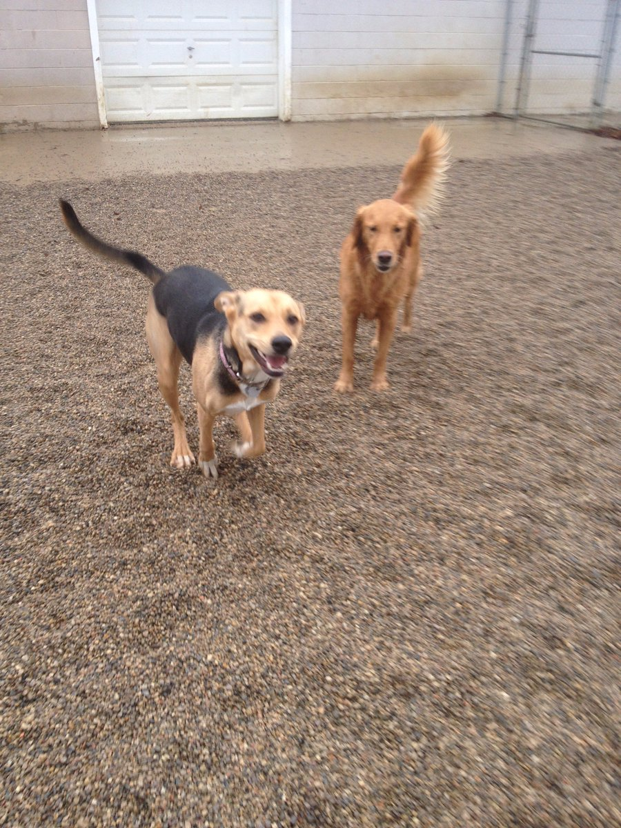 Chloe is all smiles today to be playing with Maggie Mae