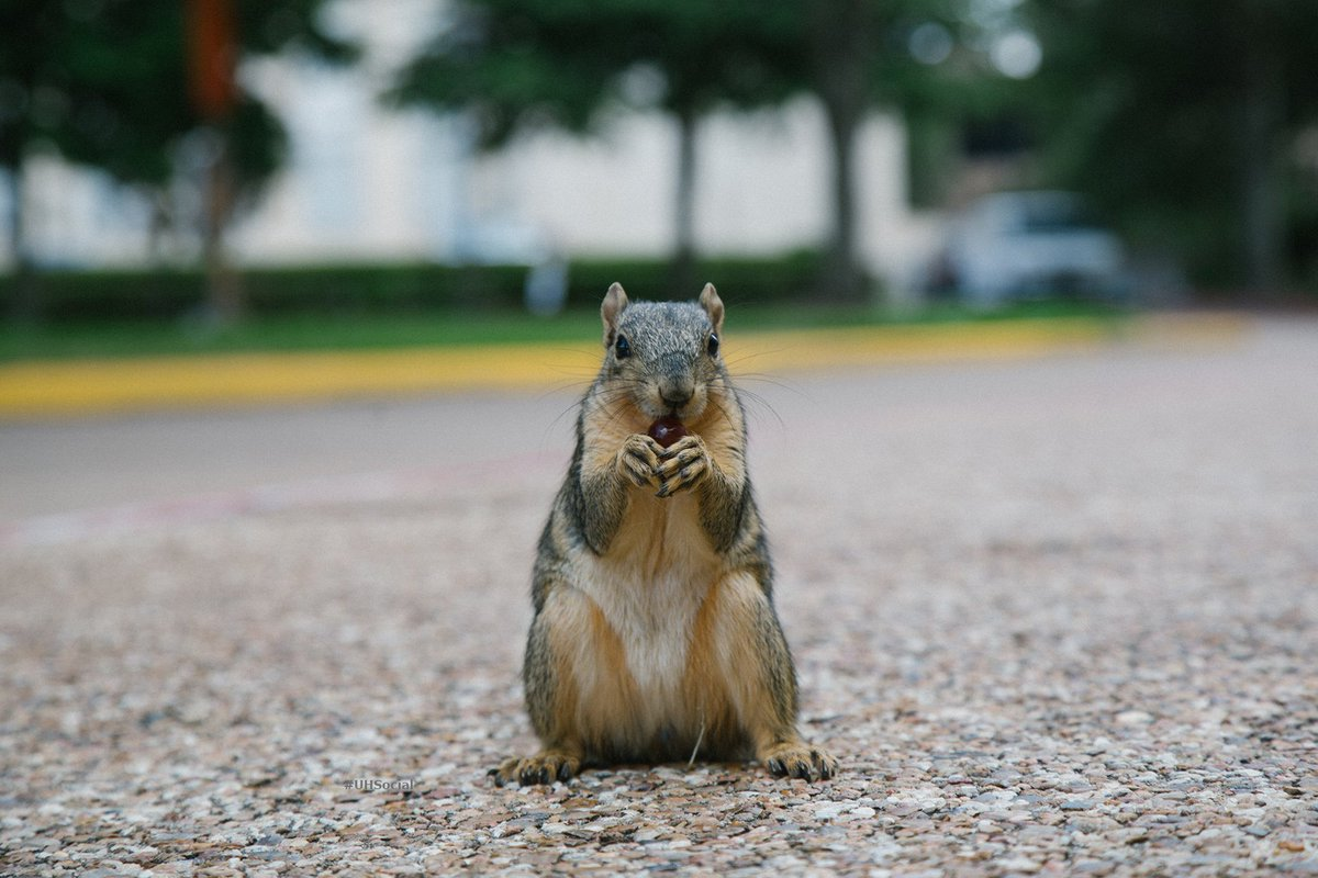 Every day is #SquirrelAppreciationDay! Because #UHSquirrels. 🐾 https:/...