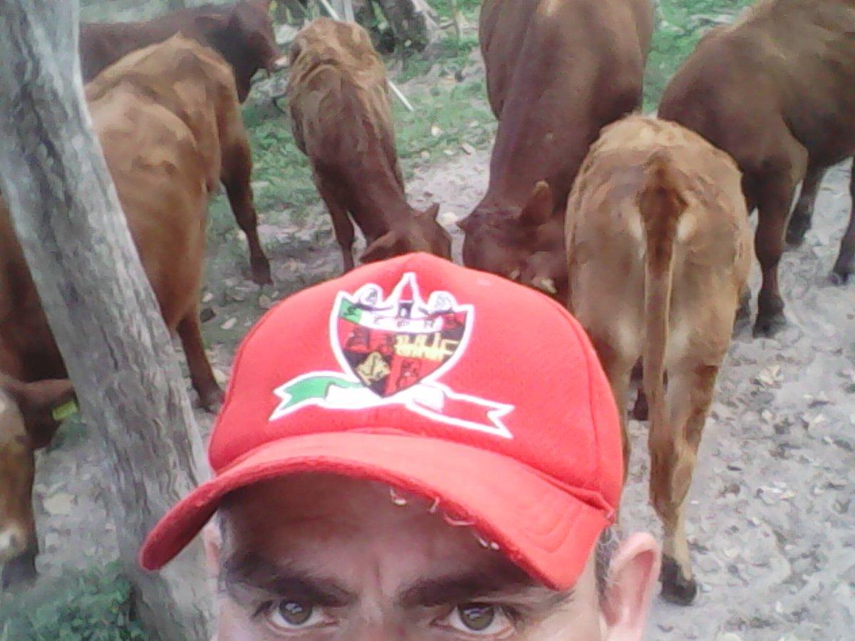 #ranchlife #sihaytrabajo #Colega #Ganaderia<br>http://pic.twitter.com/6uq1gt5g2E