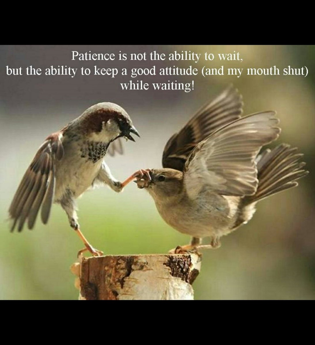 But there shall not an hair of your head perish. In your patience poss...