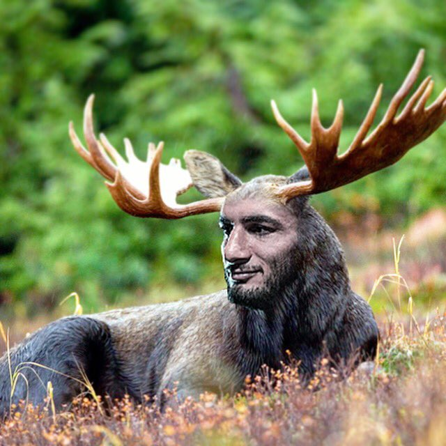 Image result for mousasi moose meme