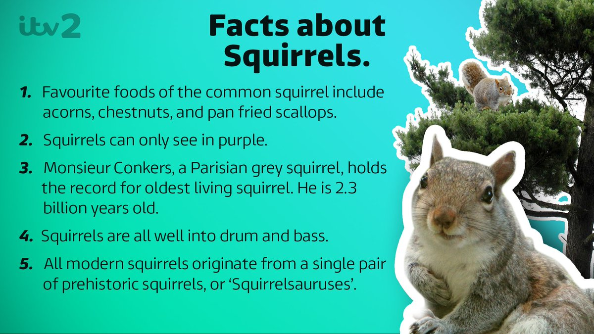 The day has come. It's #SquirrelAppreciationDay. Here are five things...