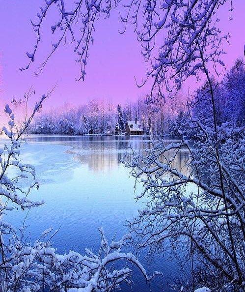 ~A touch of color ... ❄️💜❄️💙❄️  #HappyWeekend https://t.co/DFmtUctUv6