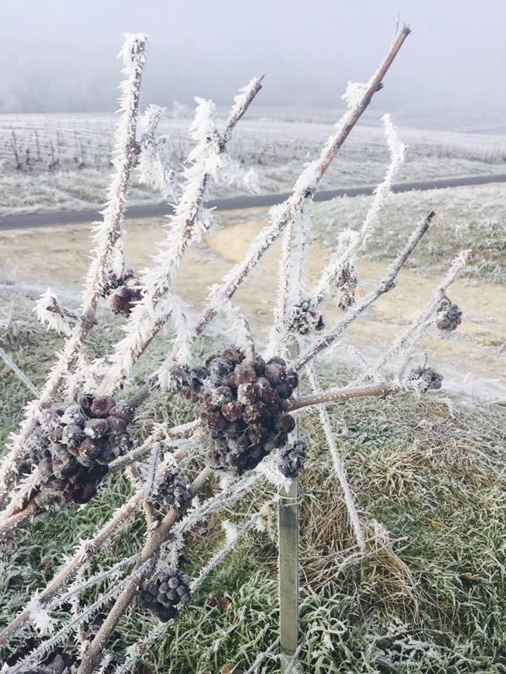 Merci Les #champagnes de #vignerons pour ces magnifiques photos des #vignes ! Chaque saison apporte une beauté supplémentaire à nos vignes..<br>http://pic.twitter.com/ptakqLjApZ