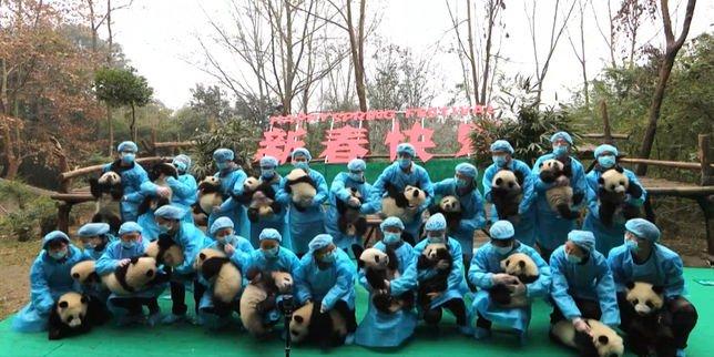 En #Chine, des bébés pandas réunis pour fêter la nouvelle année. Adorable !   http://www. nautiljon.com/breves/en+chin e,+des+b%C3%A9b%C3%A9s+pandas+r%C3%A9unis+pour+f%C3%AAter+la+nouvelle+ann%C3%A9e,4909.html &nbsp; …  #NouvelAnChinois #Panda<br>http://pic.twitter.com/3fQGpVBgEe
