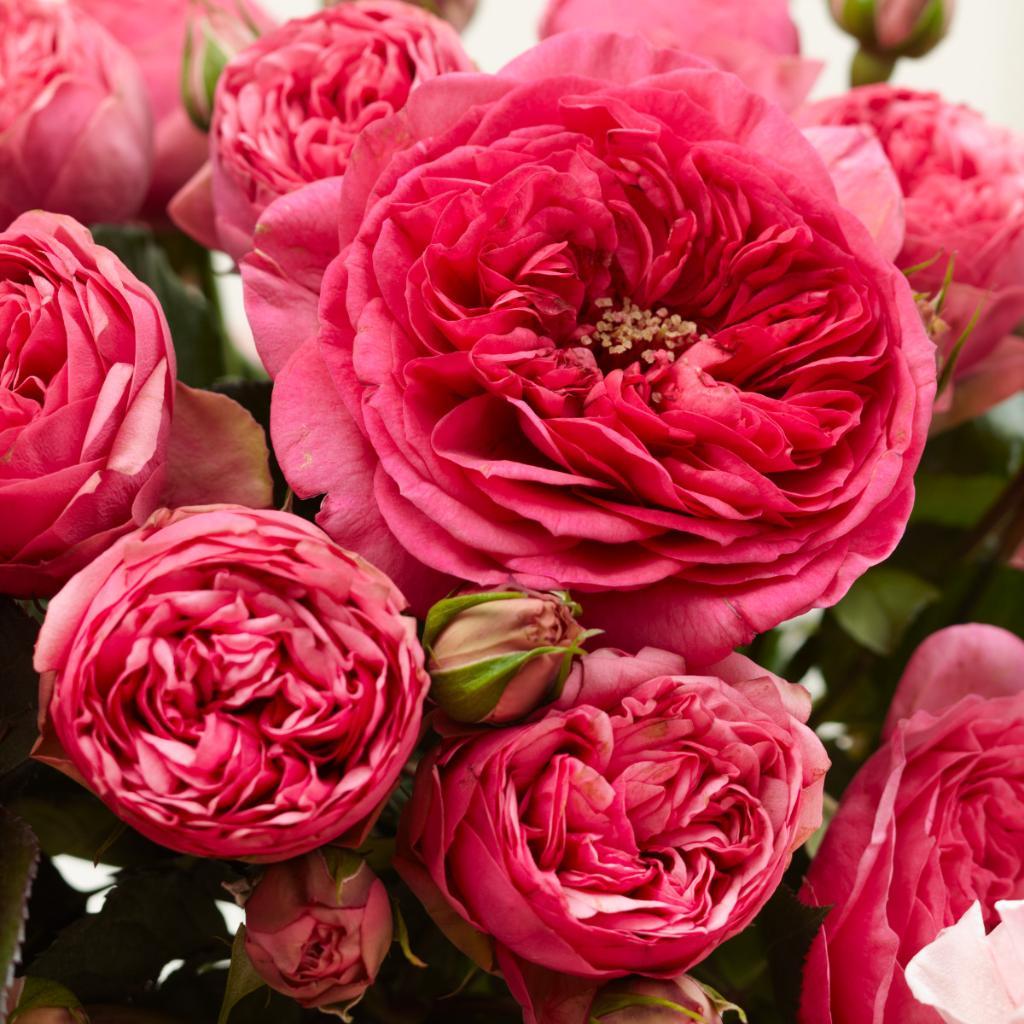 1-800-FLOWERS.COM (@1800flowers)