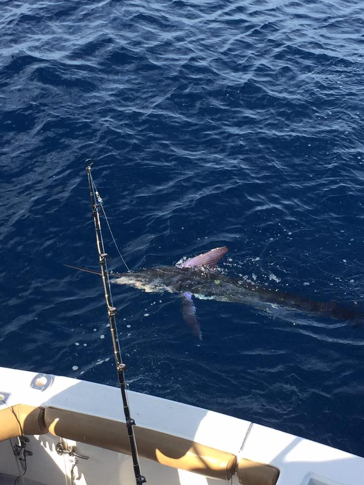 Cabo, MX - Go Deeper released 7 Striped Marlin.