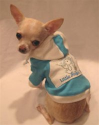 ANGEL PUP JEWELED HOODIE! Grab it:   #dogs #puppy #doghoodie #dogsoftwitter @PoshPuppy