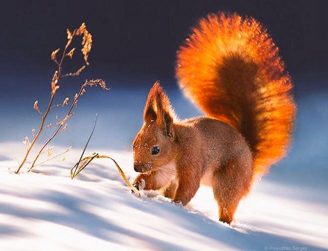 #SquirrelAppreciationDay https://t.co/KUIHAVxDMM