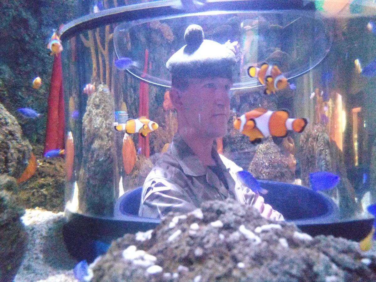 St Andrews Aquarium Fifeaquarium Twitter