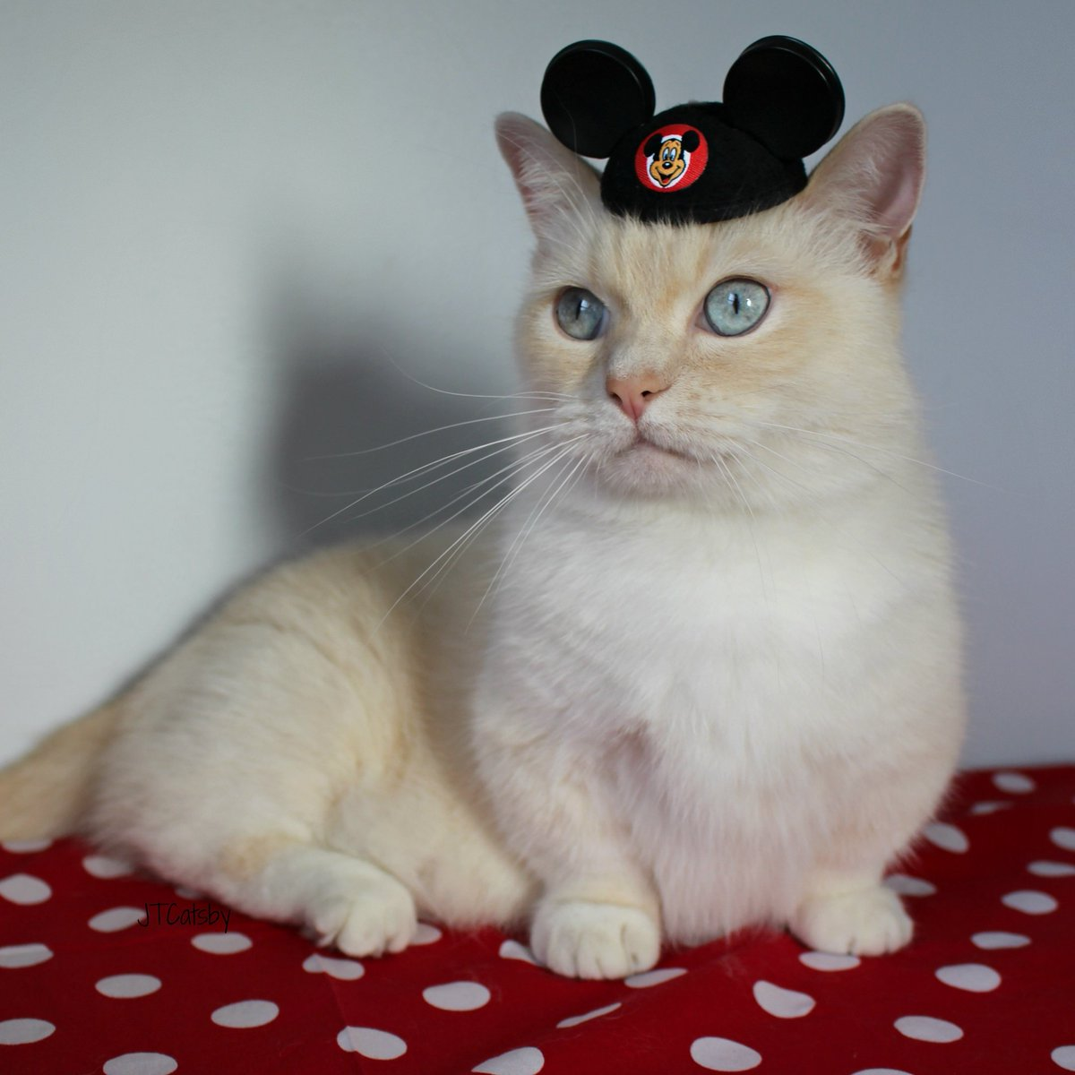 It&#39;s #NationalPolkaDotDay ! JT Catsby loves his Disney dots! #RocktheDots #polkadotday #disneyside #disneybound  #sothisislove  #JTCatsby<br>http://pic.twitter.com/gP1HDKygEe