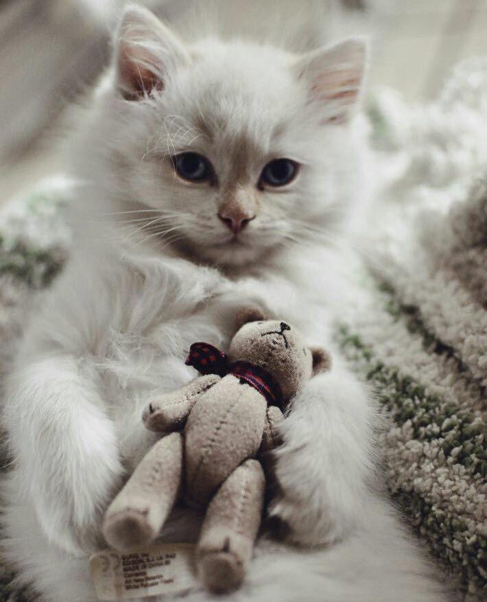 I love my teddy. Can you love me? #cute !!!!!