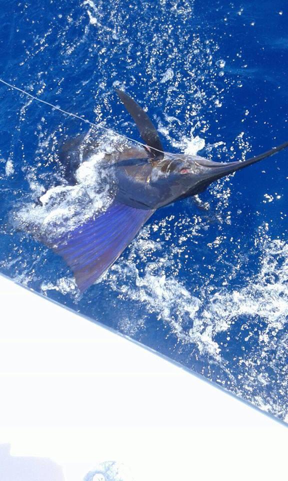 Quepos, CR - Caribsea released 5 Sailfish.