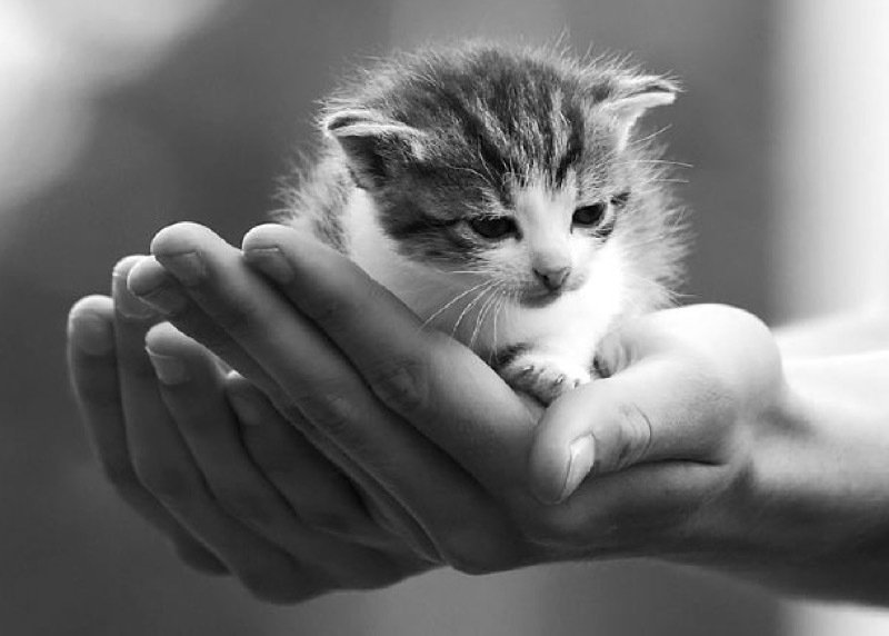 Teeny tiny kitten in the palm of your hand...