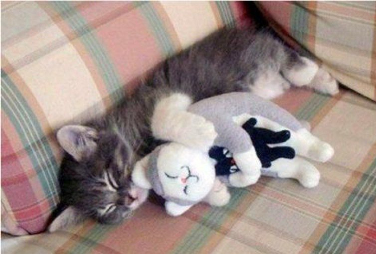 Just having a nap with my favourite toy...... #cute