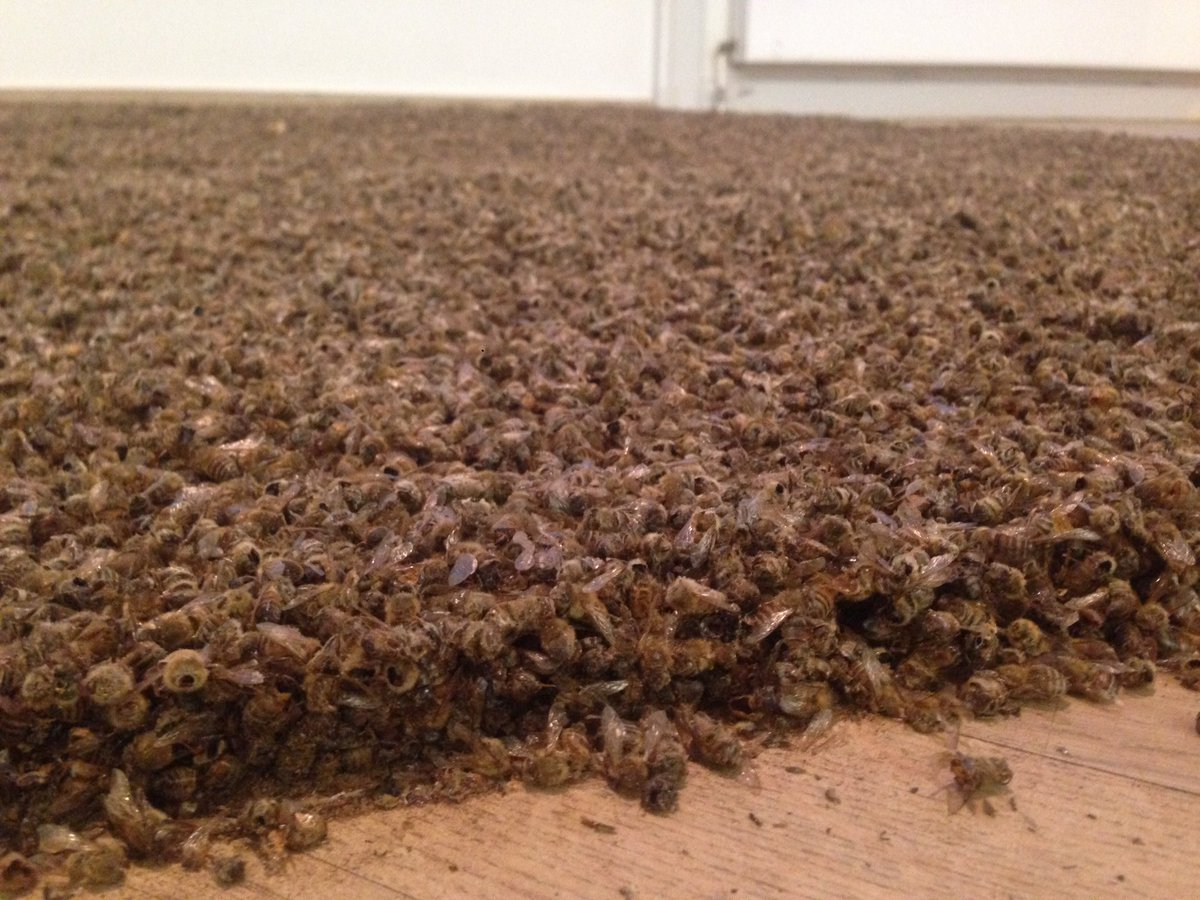 One million dead dried bees https://t.co/Q6FWUE3dY6