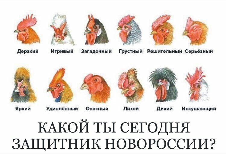 """""""Сначала были разговоры за то, что Донбасс будет в составе Украины, а потом придумали """"ЛНР"""", """"ДНР"""", - пособник террористов сдался СБУ - Цензор.НЕТ 8879"""