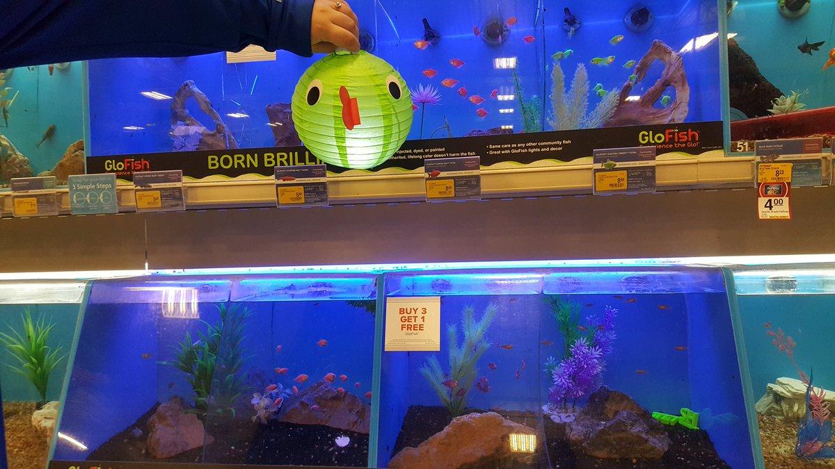 Freshwater aquarium fish boise idaho -  Glofish Fun For All At Petsmart From Now Til 3p Meridianidaho Boise Petsmarteventspic Twitter Com X9dmjn1xkh At Petsmart