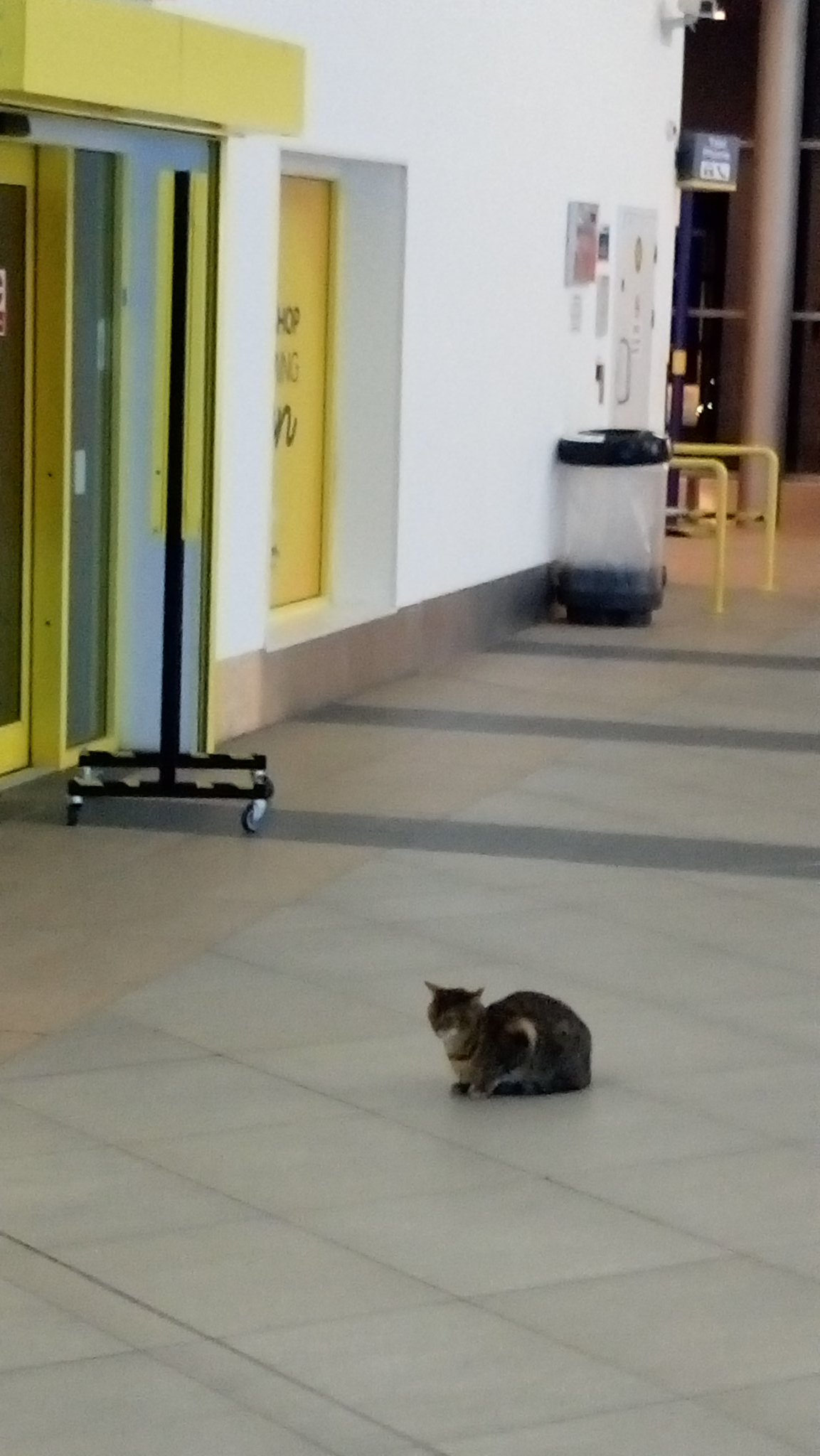 @thecatreviewer this cat has claimed Liverpool South Parkway station for their own. 10/10 for territorial ambition and sang-froid https://t.co/Eyhc4CJunx