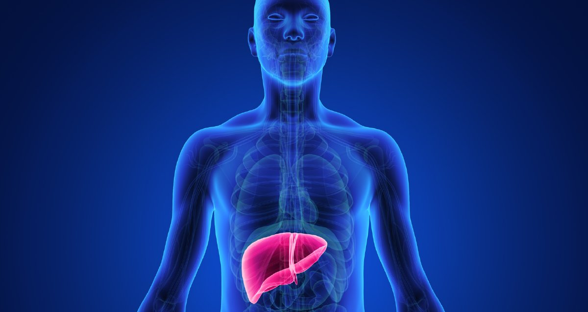 Webmd On Twitter Your Liver Has About 500 Jobs Learn More About
