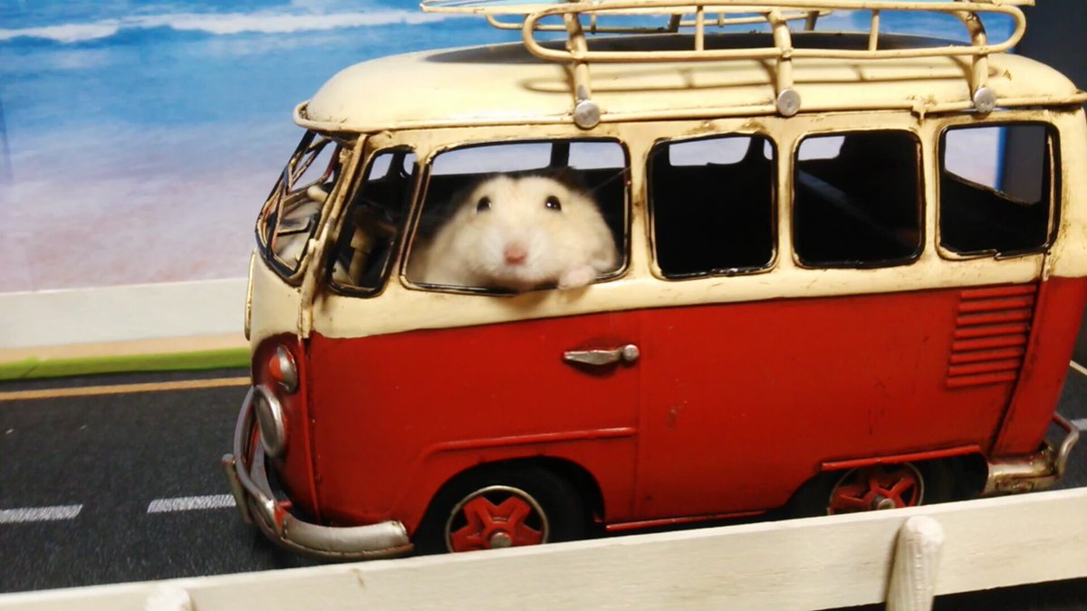 金蔵 「ほら!海行きますよ! 嫌なこと忘れに! 乗ってください!」
