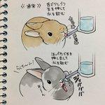ウサギの水の飲み方が、想像以上にダイナミックでワロタ!