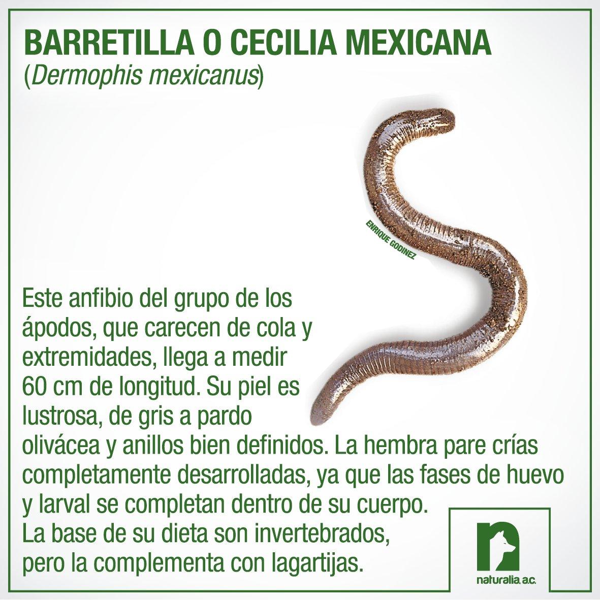Naturalia AC on Twitter: \