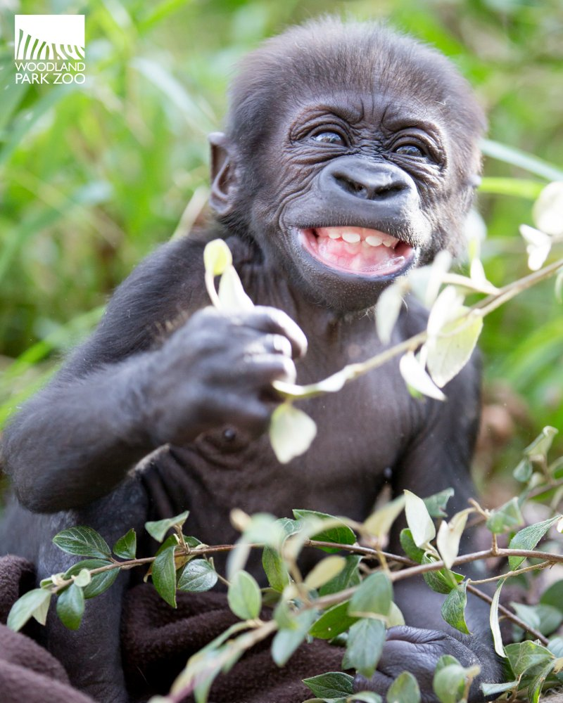 Thanks #cuteanimaltweetoff for making the whole world smile. https://t.co/pZT5ndkIBE
