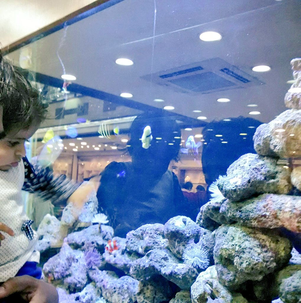Fish aquarium in vadodara -  Vadodara Twitter Search