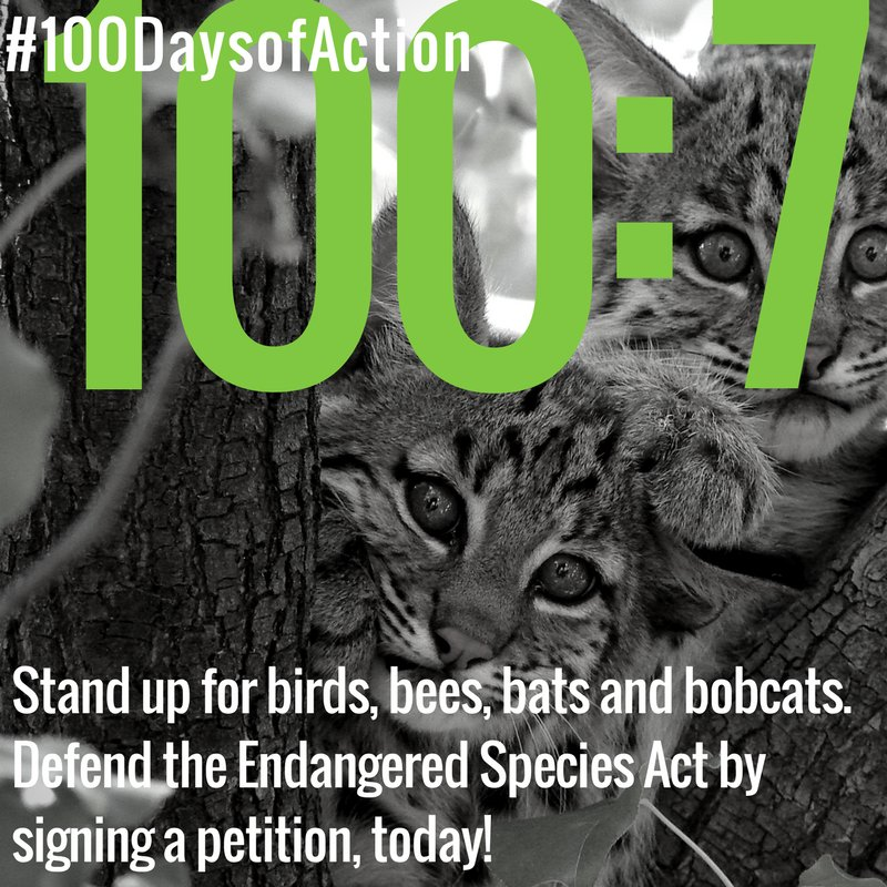 #100DaysofAction:7 Sign a petition to protect endangered species. The ESA is under attack! https://t.co/hKeelzOkyF https://t.co/jY6nVNgaqe
