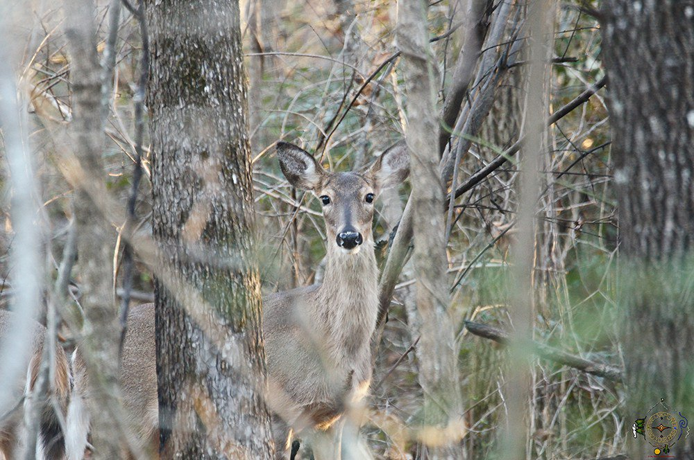 Oh #Deer In the #Forest you are never alone - #Hiking #Photo #Blog