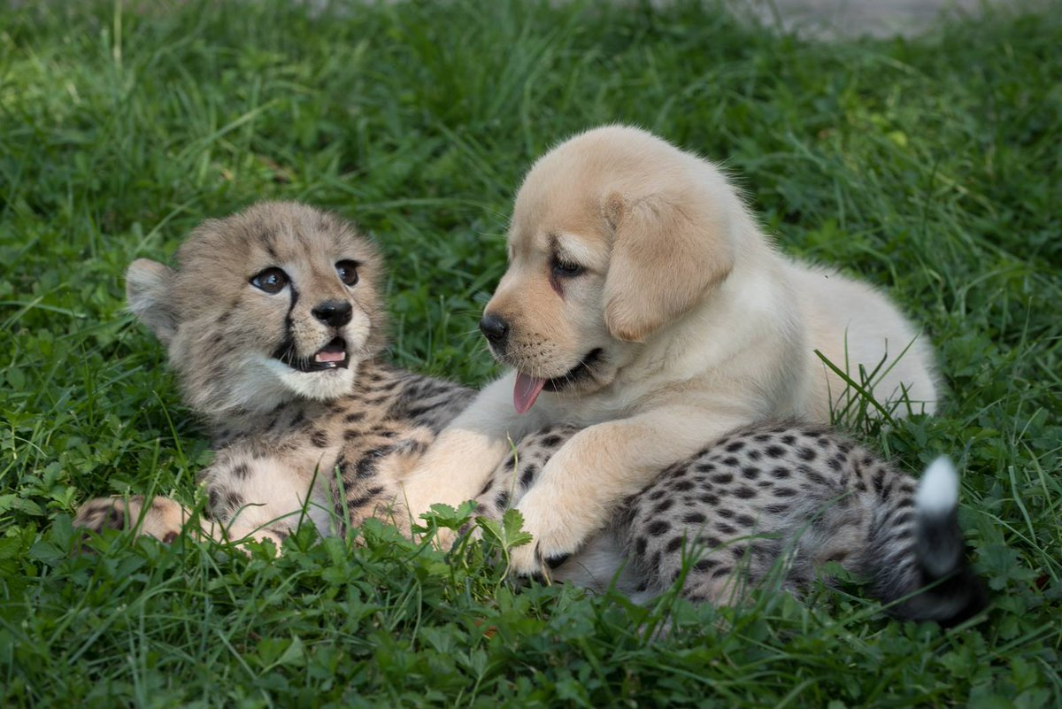 Paws down, we have the cutest animal duo!